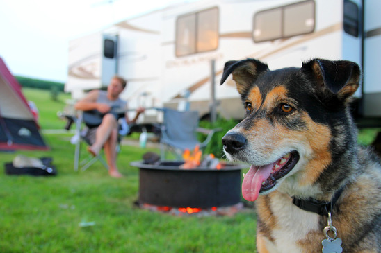 dog friendly camping napas daily growl