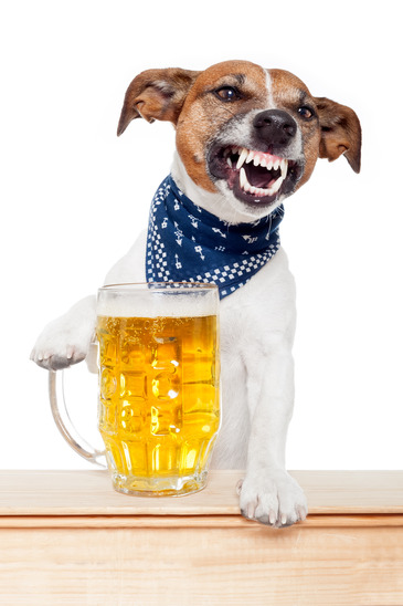 Can Dogs Drink Alcohol?